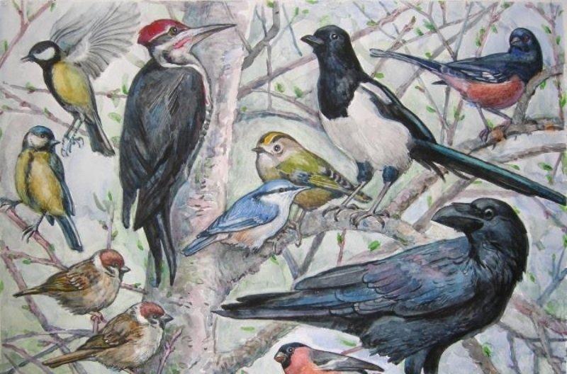 Приглашаем принять участие в Региональном конкурсе творческих работ «Птицы в нашем городе»